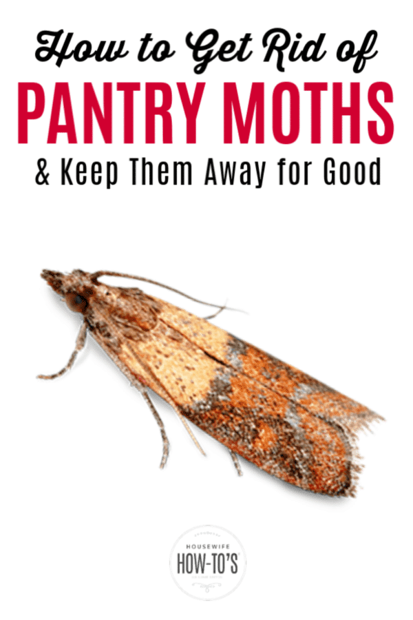 How To Get Rid Of Pantry Moths And Keep Them Out Of Your Home