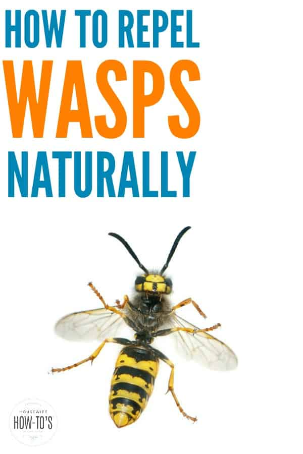 How to Repel Wasps Naturally - Don't let wasps ruin your picnics or barbecues. These tips will keep them away from your outdoor spaces. #wasps #insects #outdoors #naturalpestcontrol