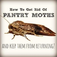 How to get rid of pantry moths from HousewifeHowTos.com
