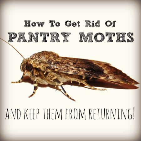 How To Get Rid Of Pantry Bugs Naturally