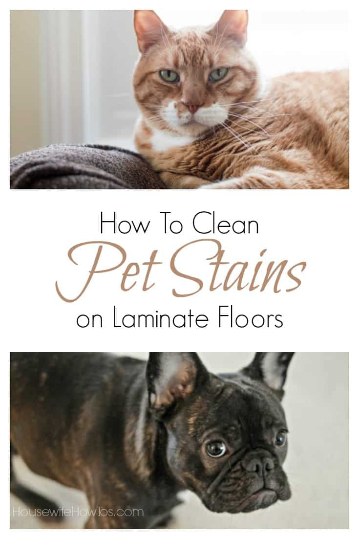 How to clean pet stains on laminate floors housewife how for How to clean floor stains