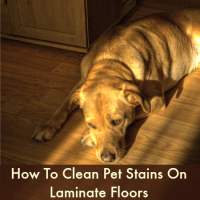 How to clean pet stains on laminate floors from HousewifeHowTos.com