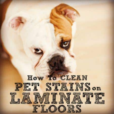 how to clean pet stains on laminate floors from