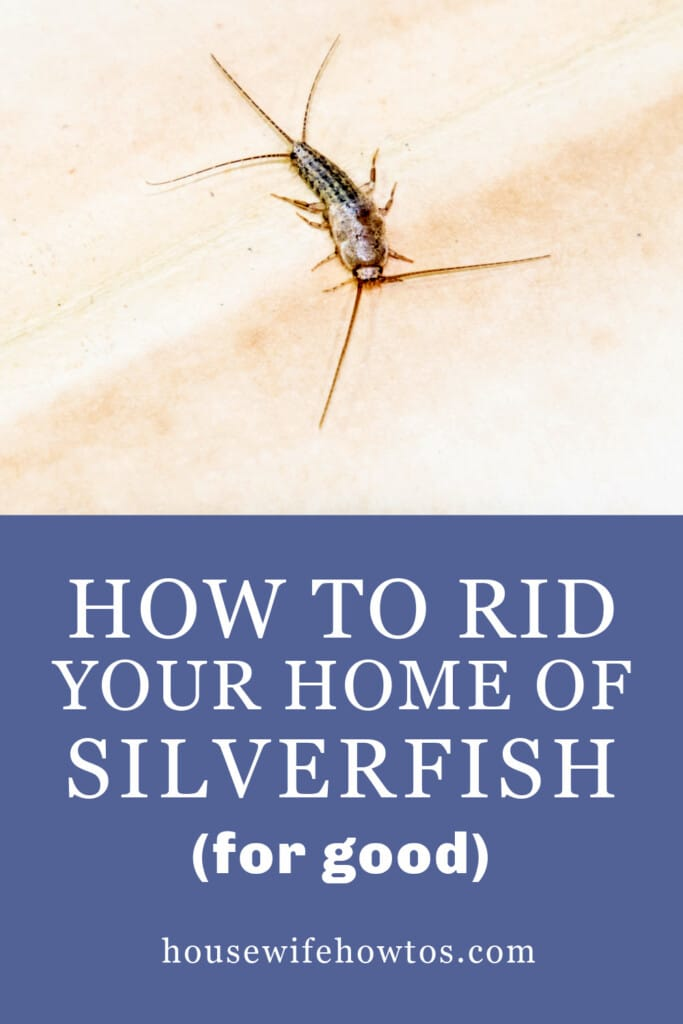 How to rid your home of silverfish for good