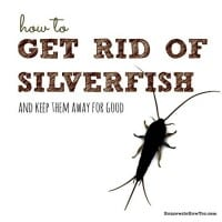 How To Get Rid Of Silverfish (and keep them away)