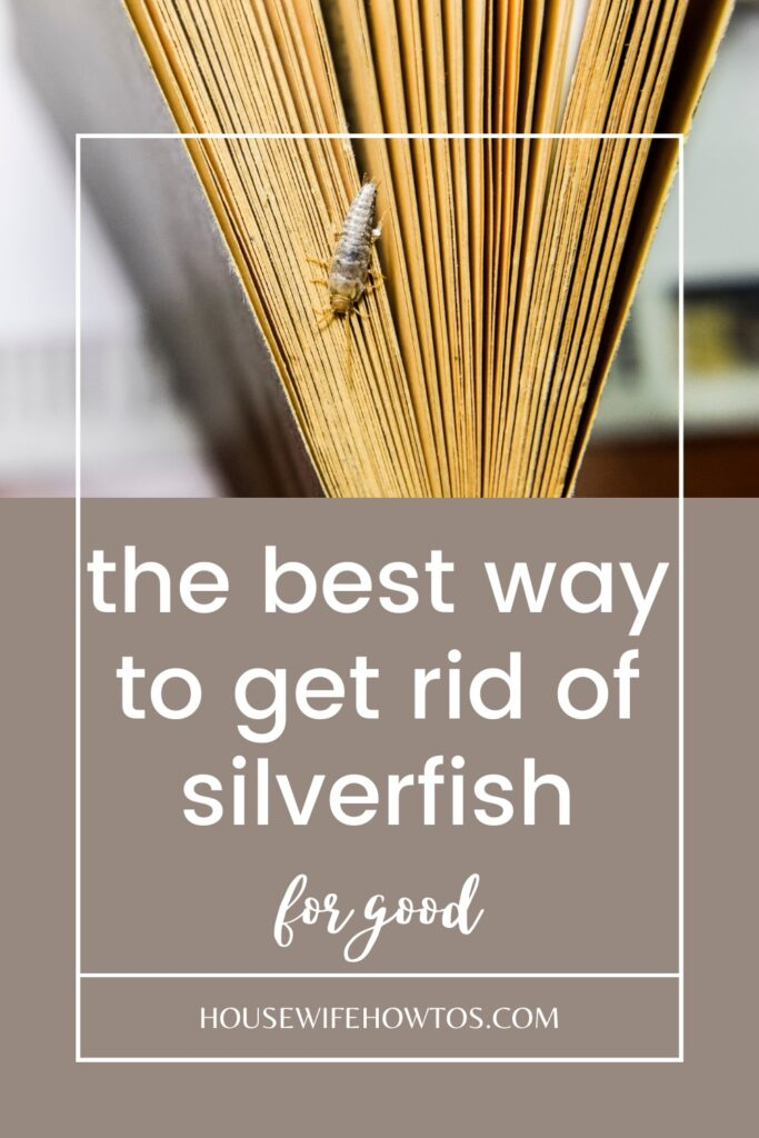 the best way to get rid of silverfish for good naturally