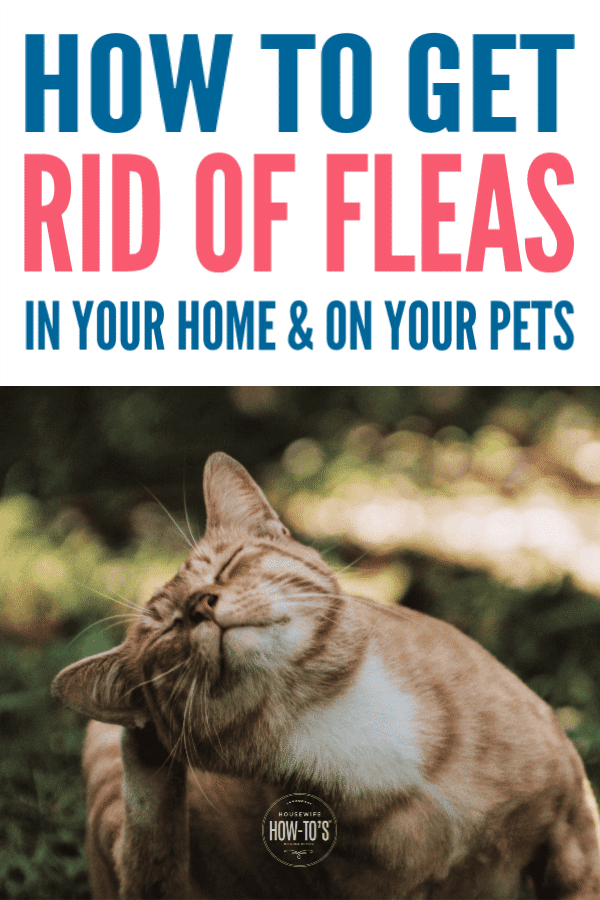 How to get rid of cat fleas in your house naturally