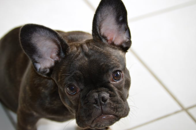 Get Rid Of Fleas Naturally On Your Pet And In Your Home