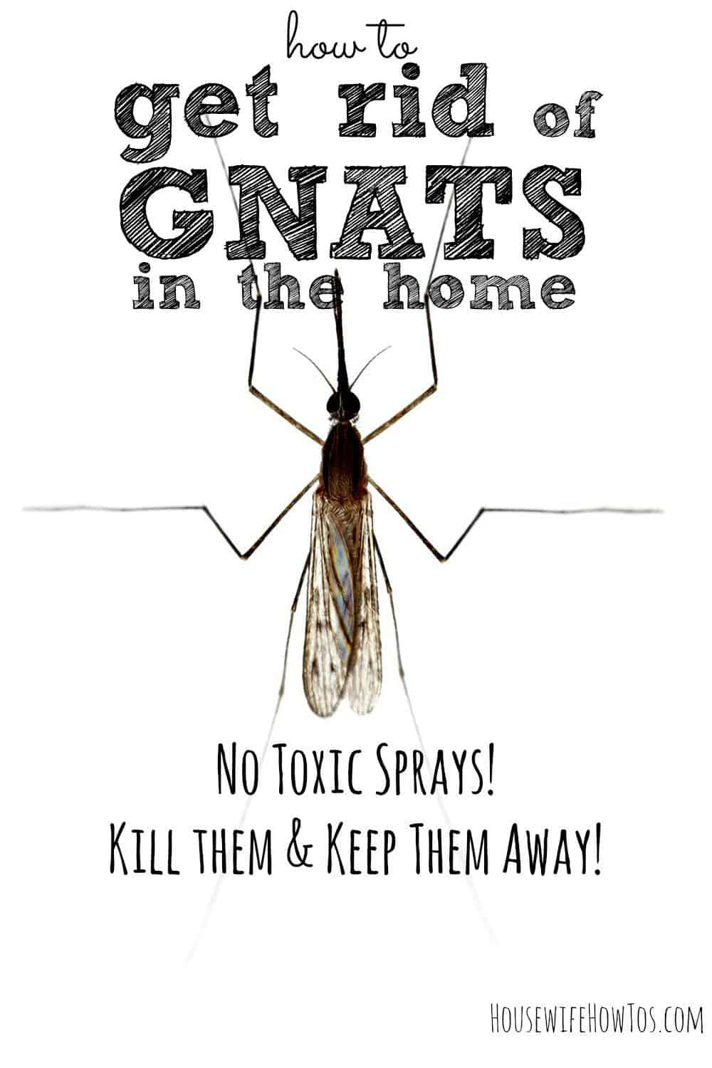 how to get rid of gnats in homes