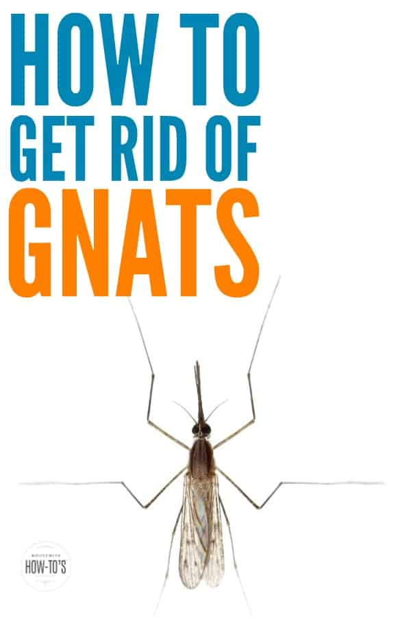 how to get rid of gnats finding swarms of these bugs in your home is - Gnats In Kitchen