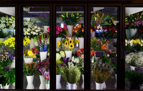 How To Keep Flowers Fresh Longer - Chill Them Overnight
