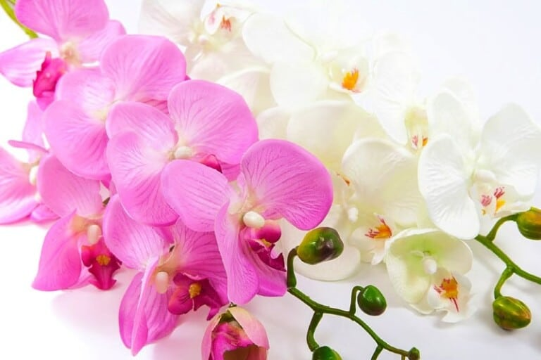 Artificial silk orchid flowers and stems