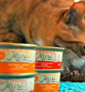 My Cat Is My Muse And He Loved Muse Cat Food