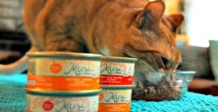 Feeding My Muse: My Cat Loves Muse Cat Food