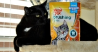 Meow Mix Brushing Bites at Walmart – Cat Approved!