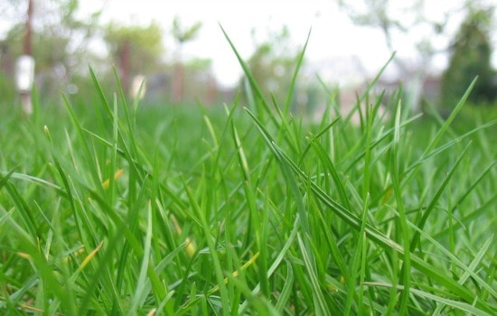 Why fall is the most important season for your lawn - Fertilize properly