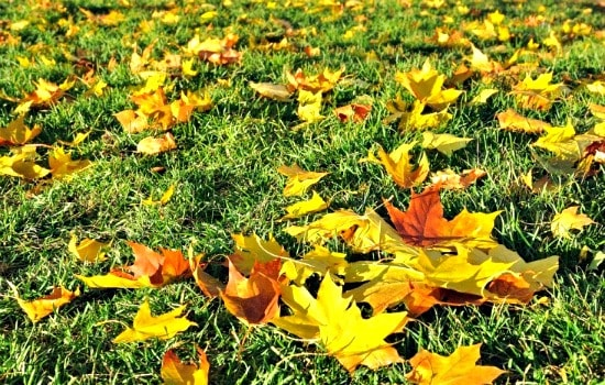 Why fall is the most important season for your lawn - Seed diligently