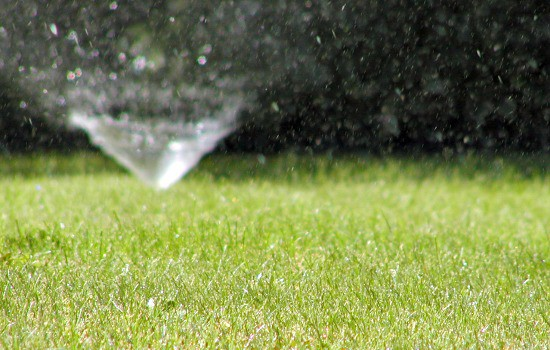 Why fall is the most important season for your lawn - Water carefully