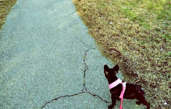 Enough with the Mommy Mafia - Walking my dog led me to write this