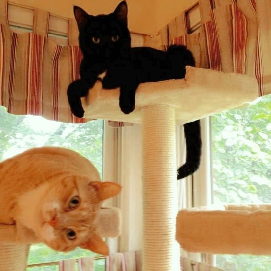 New Meow Mix Bistro - My cats are feline foodies