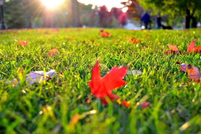 Preparing Your Home For Fall - Fertilize Your Lawn