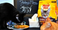 What's On The Cats' Menu? New Meow Mix Bistro!