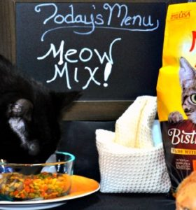 Whats on the cats menu - New Meow Mix Bistro