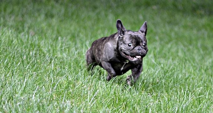How I show my dog love - Plenty of playtime