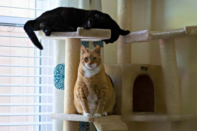 how to keep litter box area clean