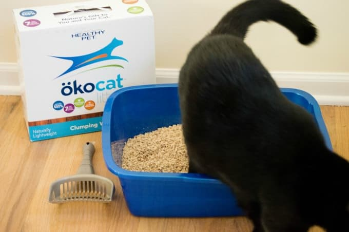 How To Keep a Litter Box Clean and Odor Free - Scoop your cats waste after use and flush it