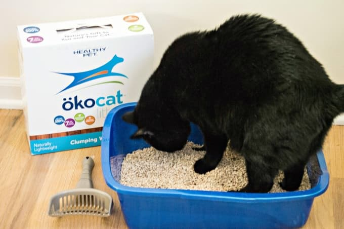 How To Keep a Litter Box Clean and Odor Free - Use a high-quality natural litter that can be flushed like okocat