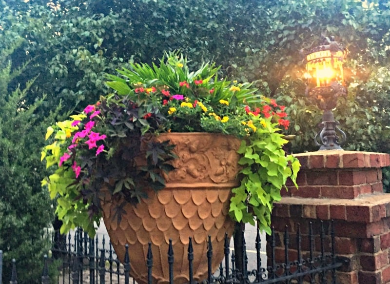 Large flowerpot with vines and pink flowers next to a brick lamppost