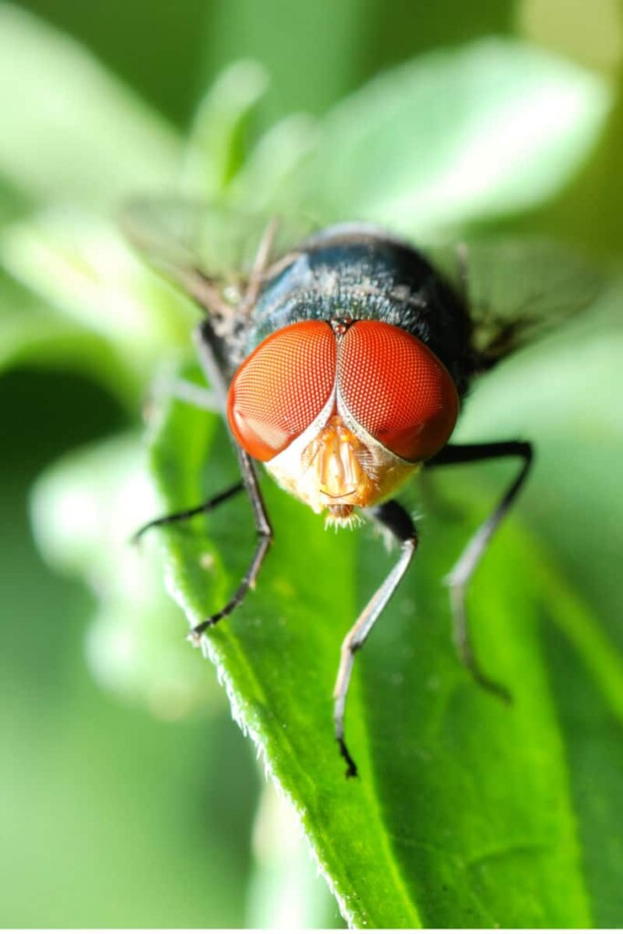 How to Get Rid of Fruit Flies like this one on a leaf