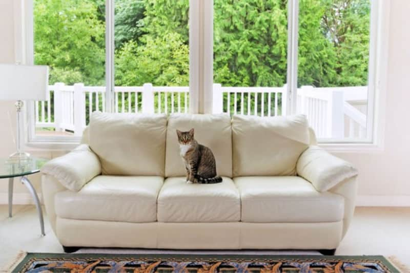 Cat on sofa set on clean white carpet