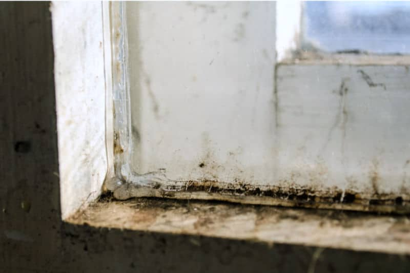 Mold On Cement And Wood Window Sill
