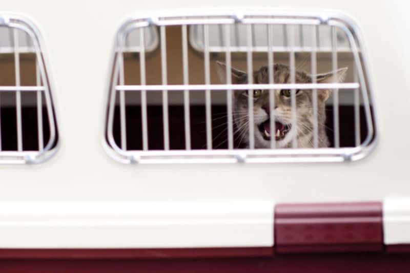 Cat in a travel kennel