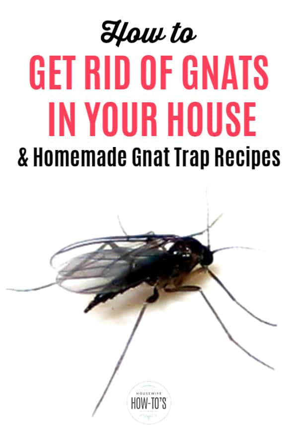 How to Get Rid of Gnats in Your House and Homemade Gnat Traps