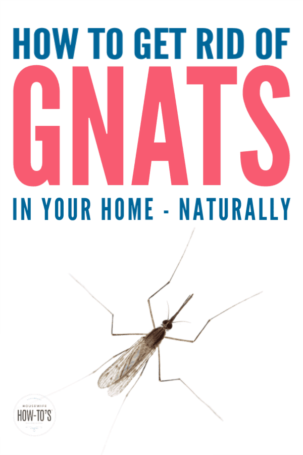 How To Get Rid Of Gnats In Your Home » Housewife How-Tos®