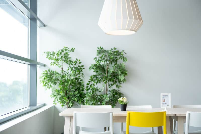Dining room with a tall plant and multi-colored chairs