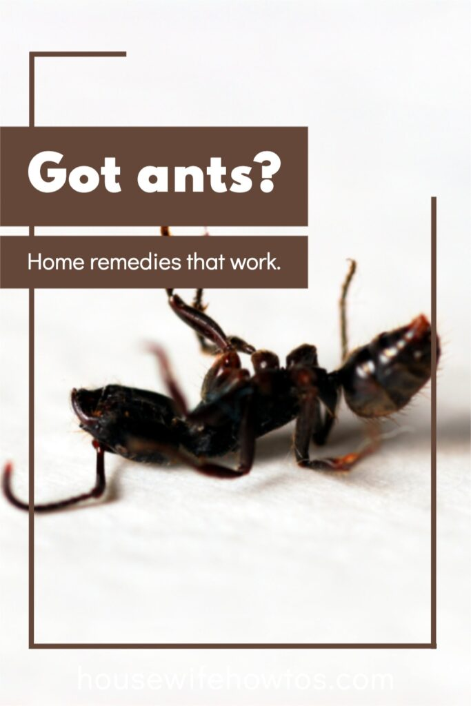 """Image of dead ant with overlay that reads """"Got ants? Home remedies that work"""""""