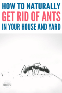 How to Get Rid of Ants Naturally #housewifehowtos #ants