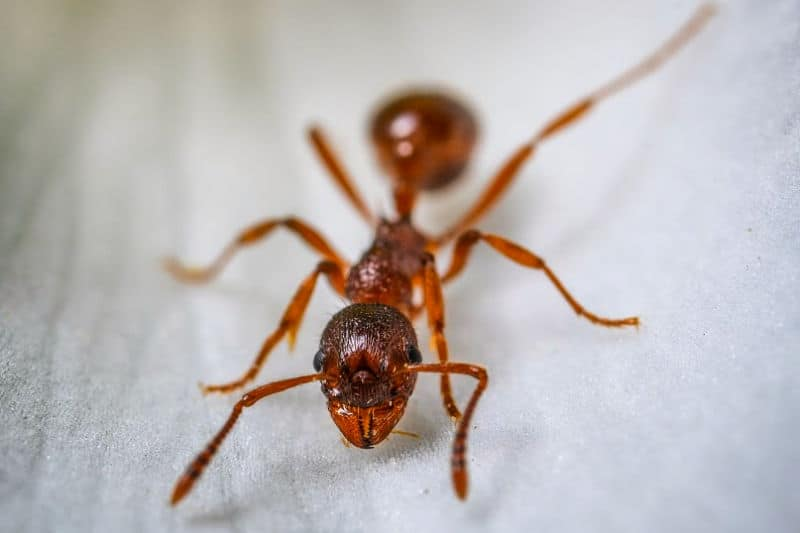 How to Get Rid of Ants Naturally In Your House and Yard