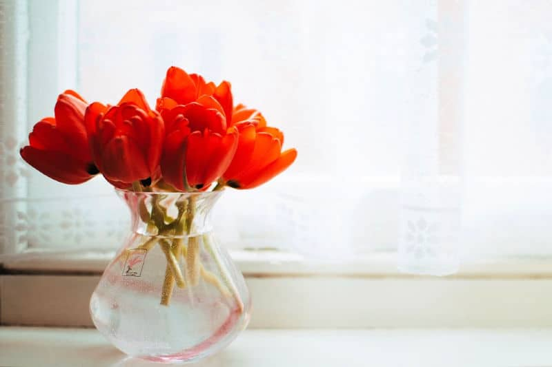 Tulips in a vase on a shaded windowsill