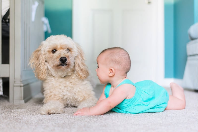 Cute baby and dog next to each other on a floor