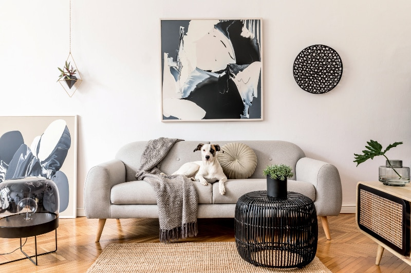 Clean and tidy home living room with dog on sofa
