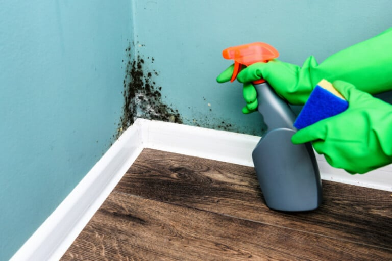 Hand in rubber glove pointing spray bottle of homemade mold remover at mold growth on painted wall
