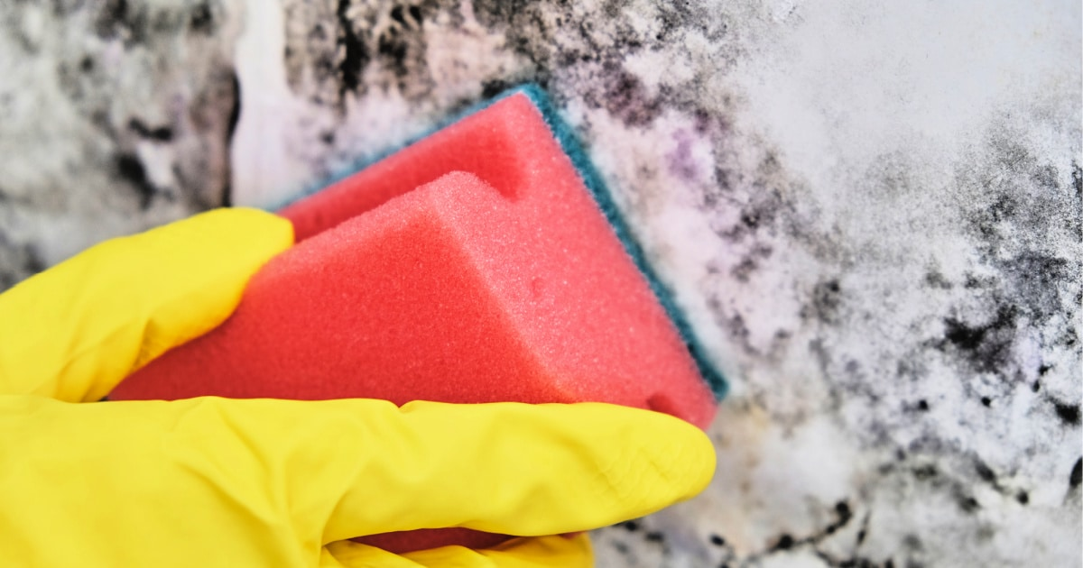 Hand in protective rubber glove using a disposable sponge to clean mold on home's wall