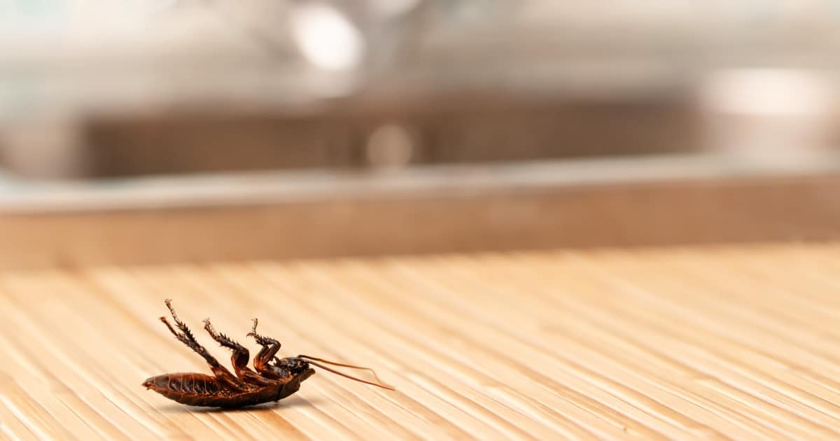 How to Get Rid of Bugs and Rodents in Your Home Naturally