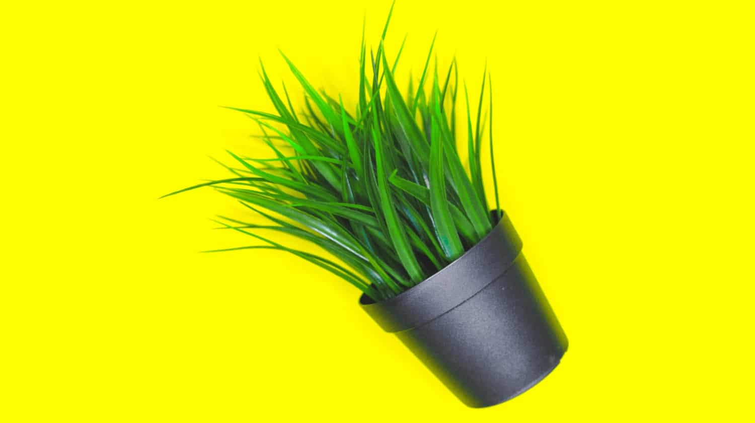 Artificial grass plant in a small pot on a bright yellow background