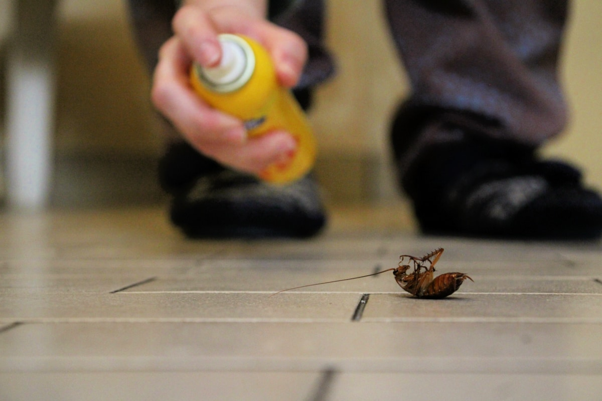 Male hand points aerosol can of bug spray at dead cockroach on floor